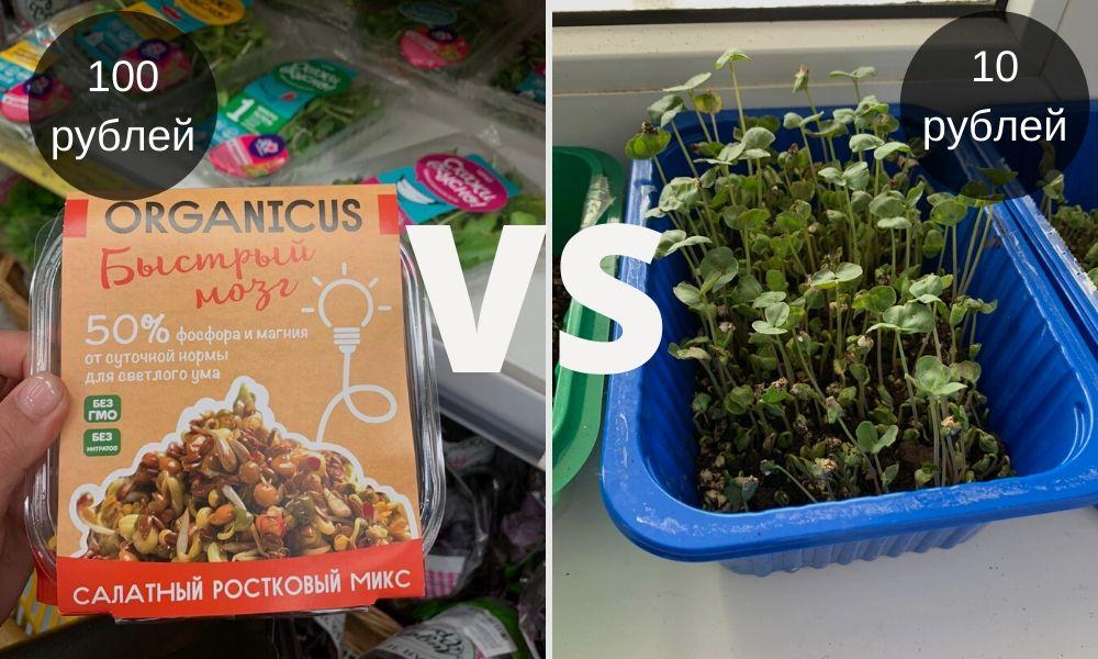 микрозелень, рассада, огород. подоконник, зелень, эко, укроп, щавель, лук