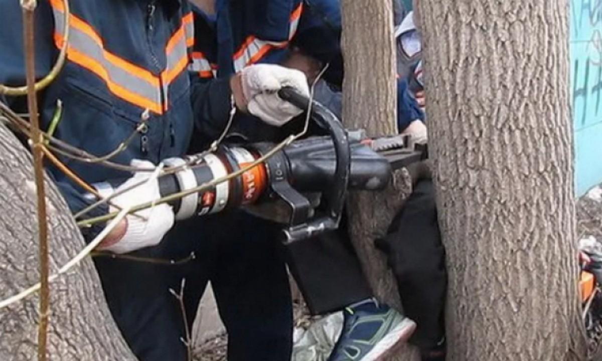 мчс, машина, дерево, инструмент