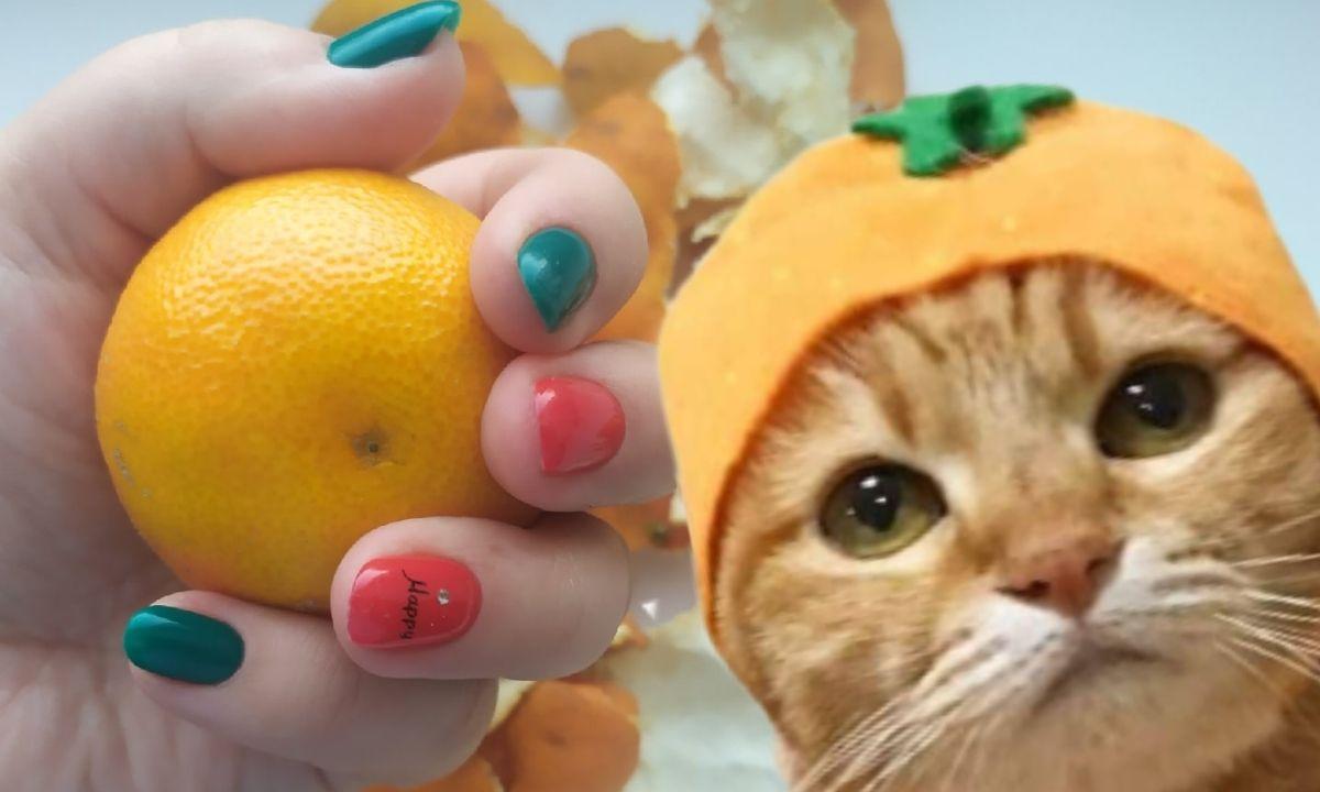 котик и мандарины