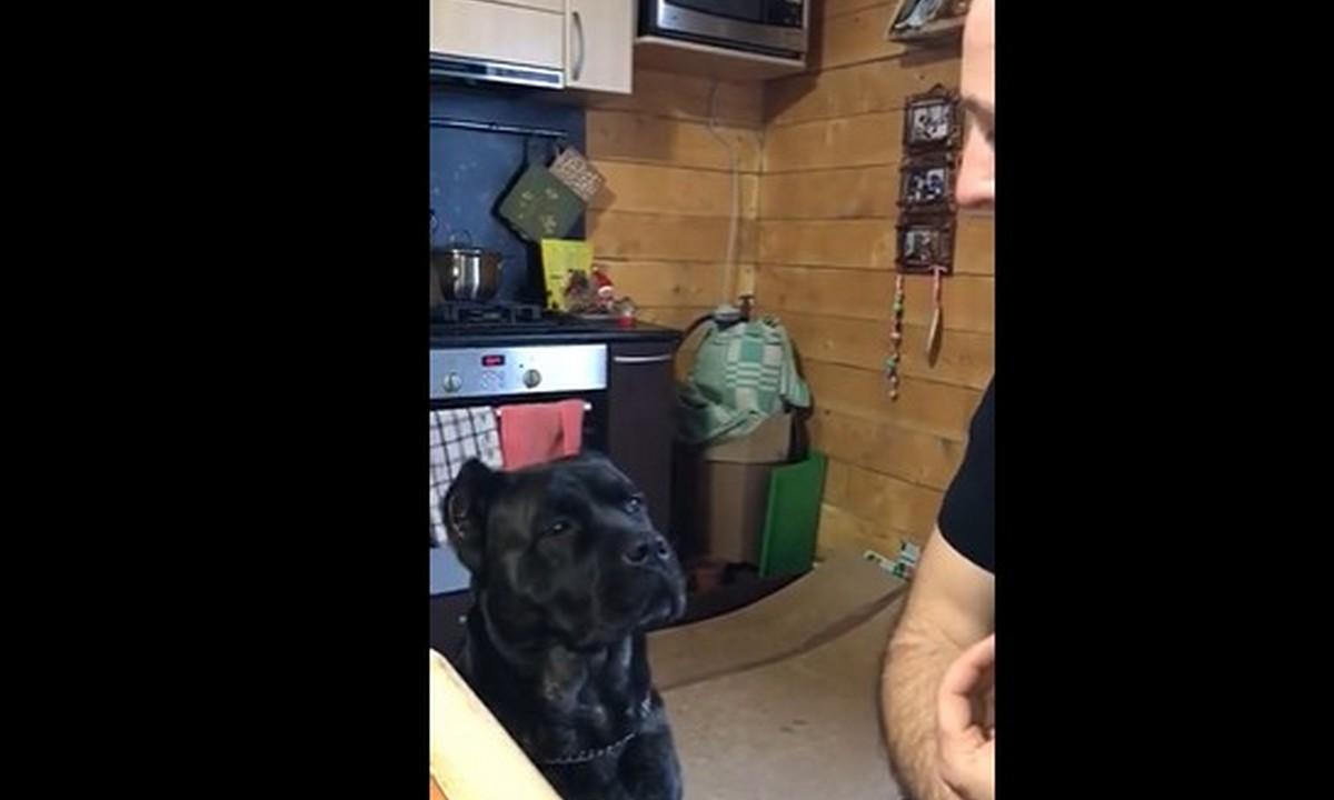 пес, собака, говорящая