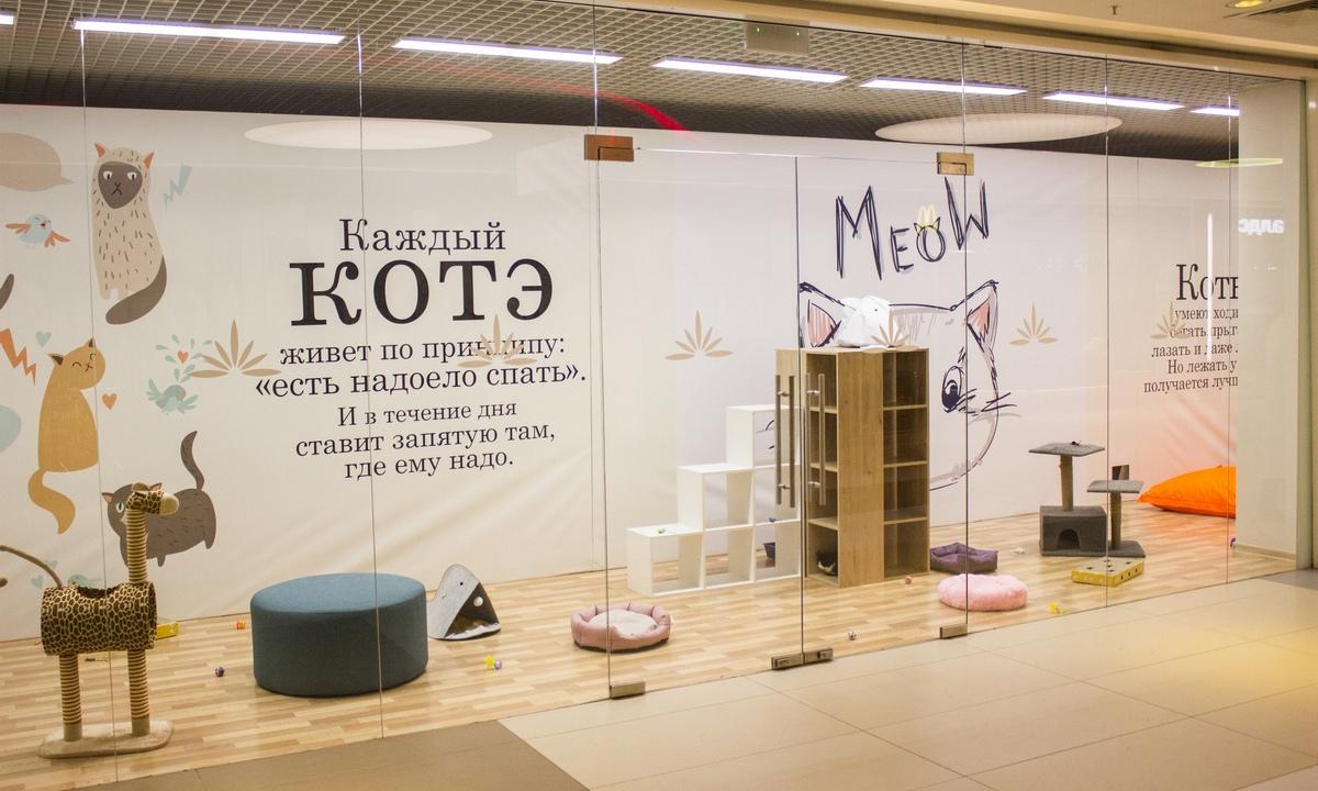 котодом, котариум, лотос плаза, приют, коты, взять кота, кот бесплатно, кошка, раздача, первый петрозаводский общественный приют, рыбалко, карелия, петрозаводск
