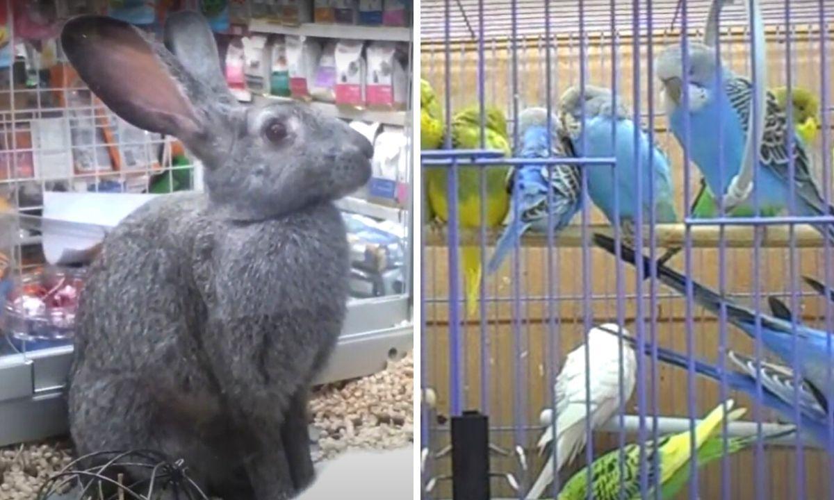 животные в зоомагазине