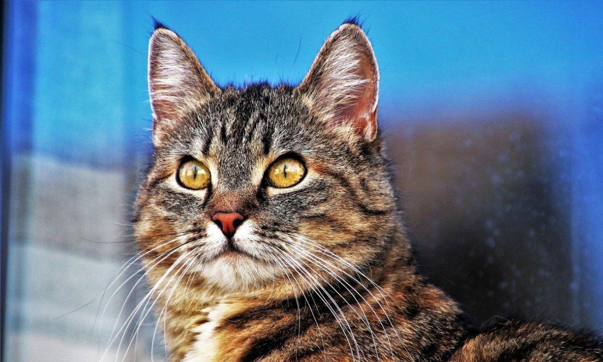 полосатый кот смотрит вдаль