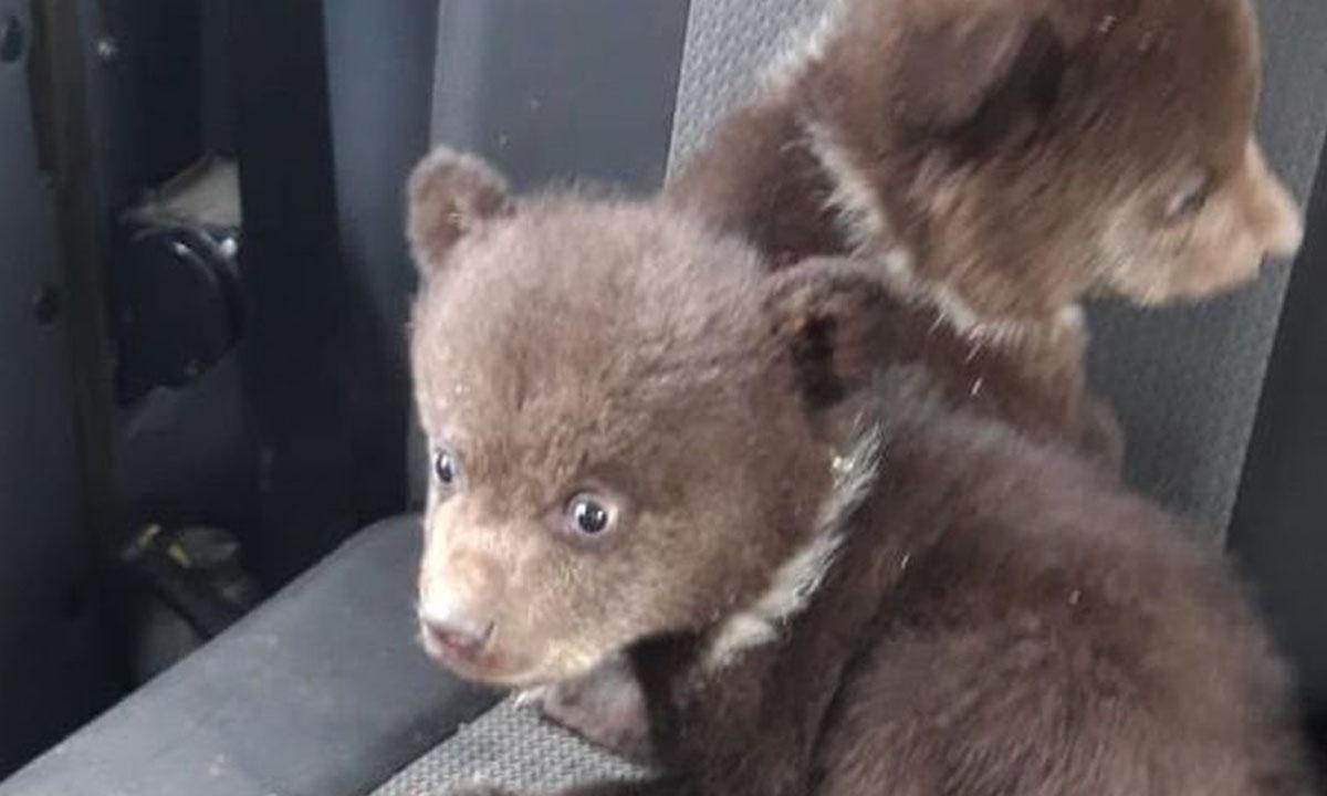 Медвежата сидят на кресле автомобиля
