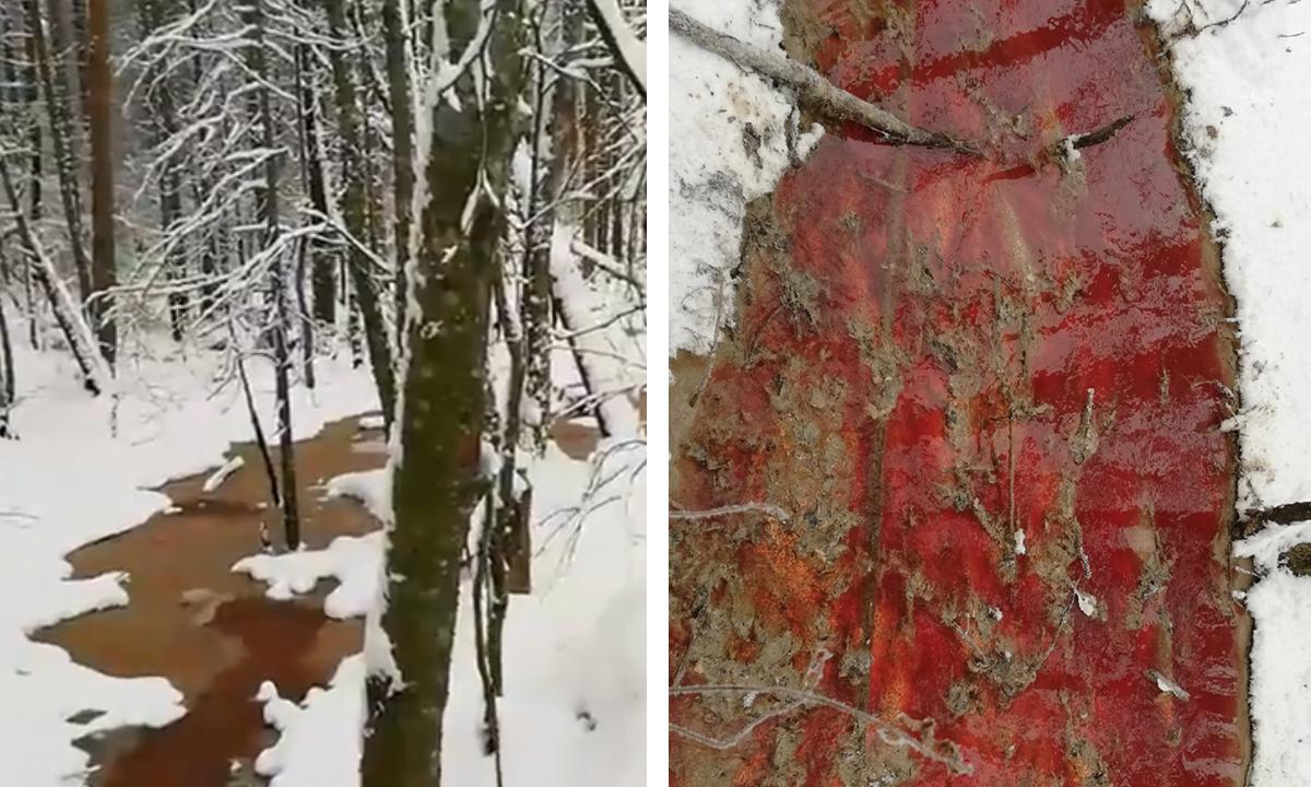 ручей красного цвета в лесу на фоне белого снега