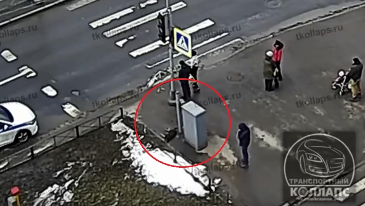 собака лежит около светофора рядом с пешеходным переходом