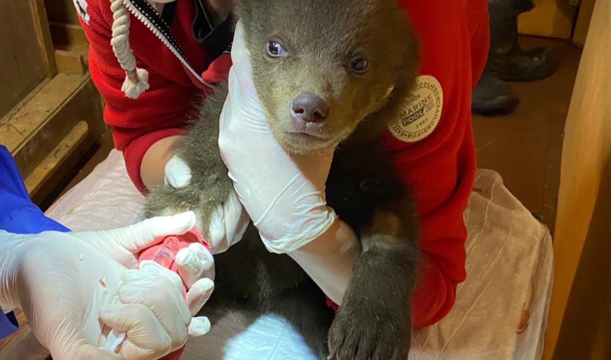 Медвежонку делают укол
