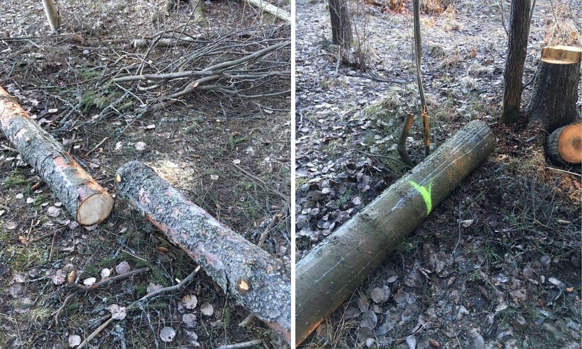 Вырубили деревья в парке Петрозаводска