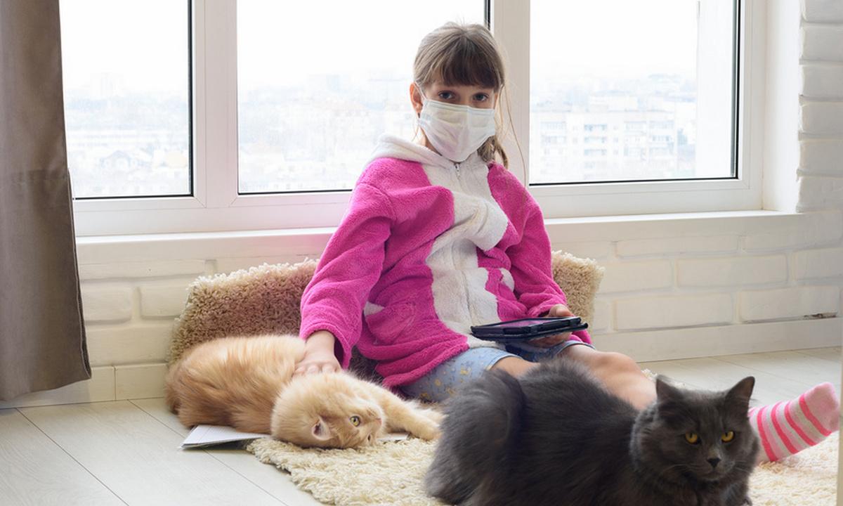 кот коронавирус