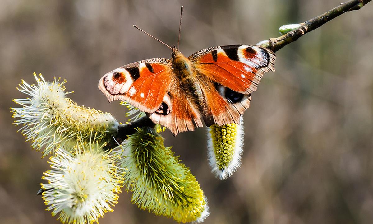 бабочка на веточке