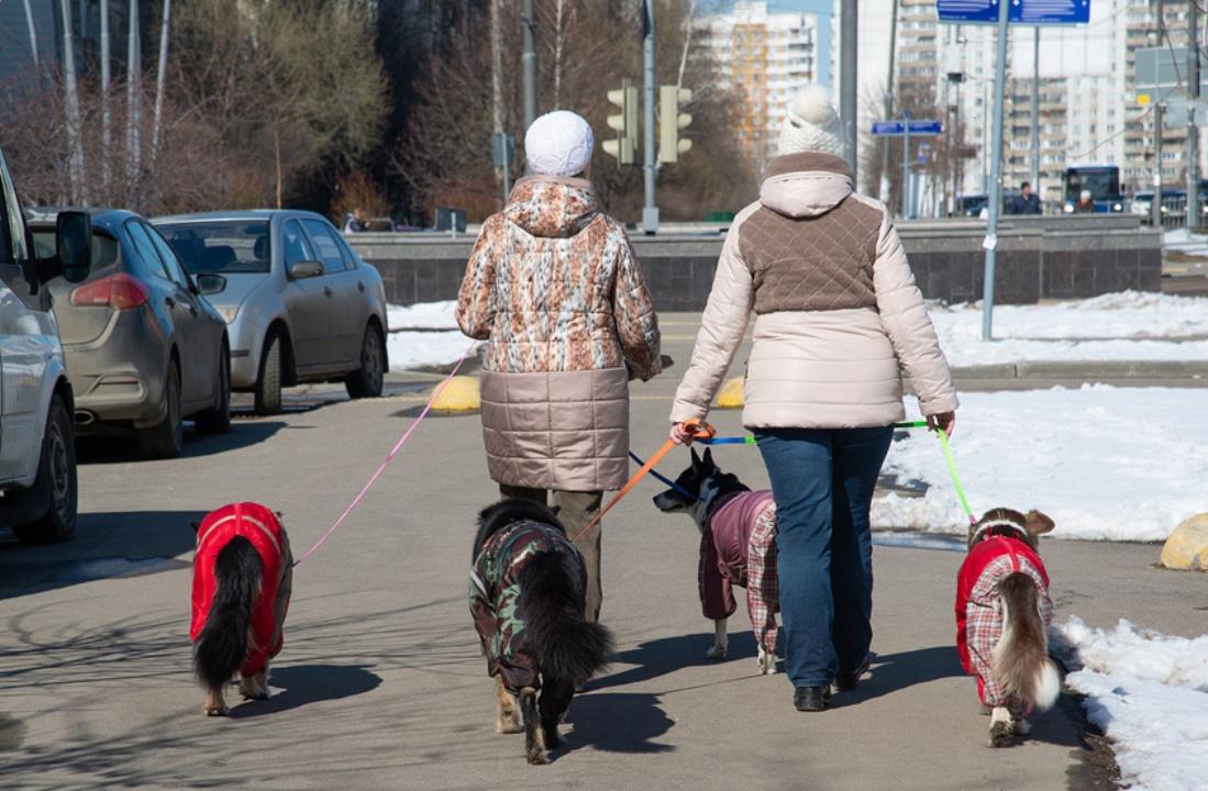 Две женщины выгуливают собак