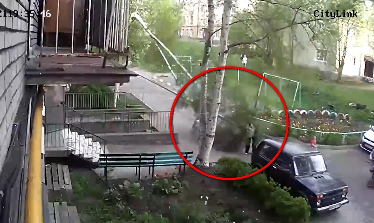дерево упала на женщину