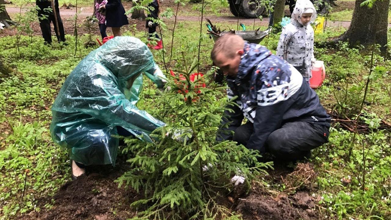 В петрозаводском парке пропали деревья, которые высадили в рамках акции «Сад памяти»