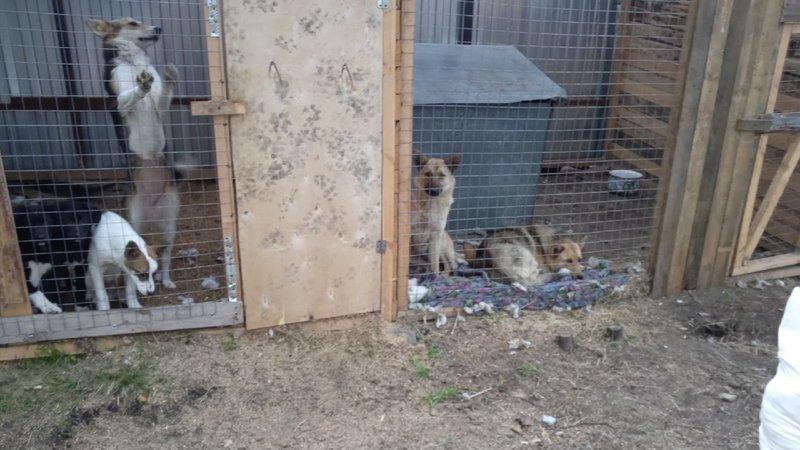 «Это будет катастрофа!»: сто кошек и собак окажется на улице: в Карелии закрывают приют для животных