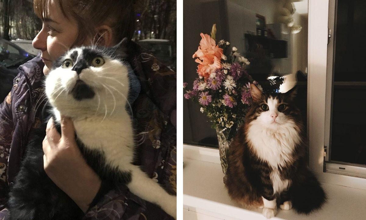 кошки, помощь, Петрозаводск
