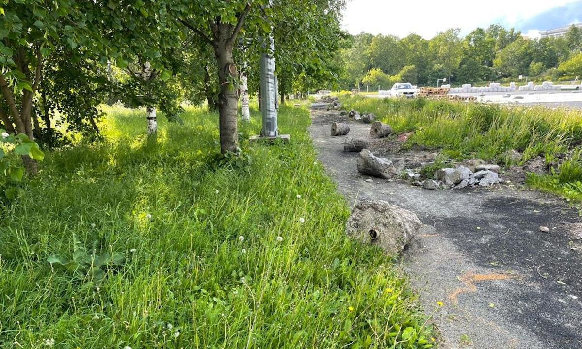 В Петрозаводске спилили деревья
