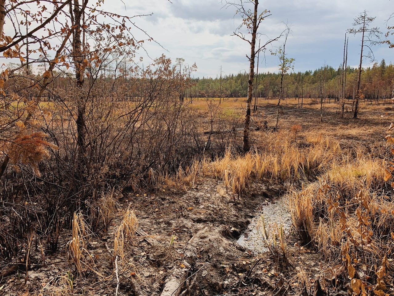 пожар Найстенъярви