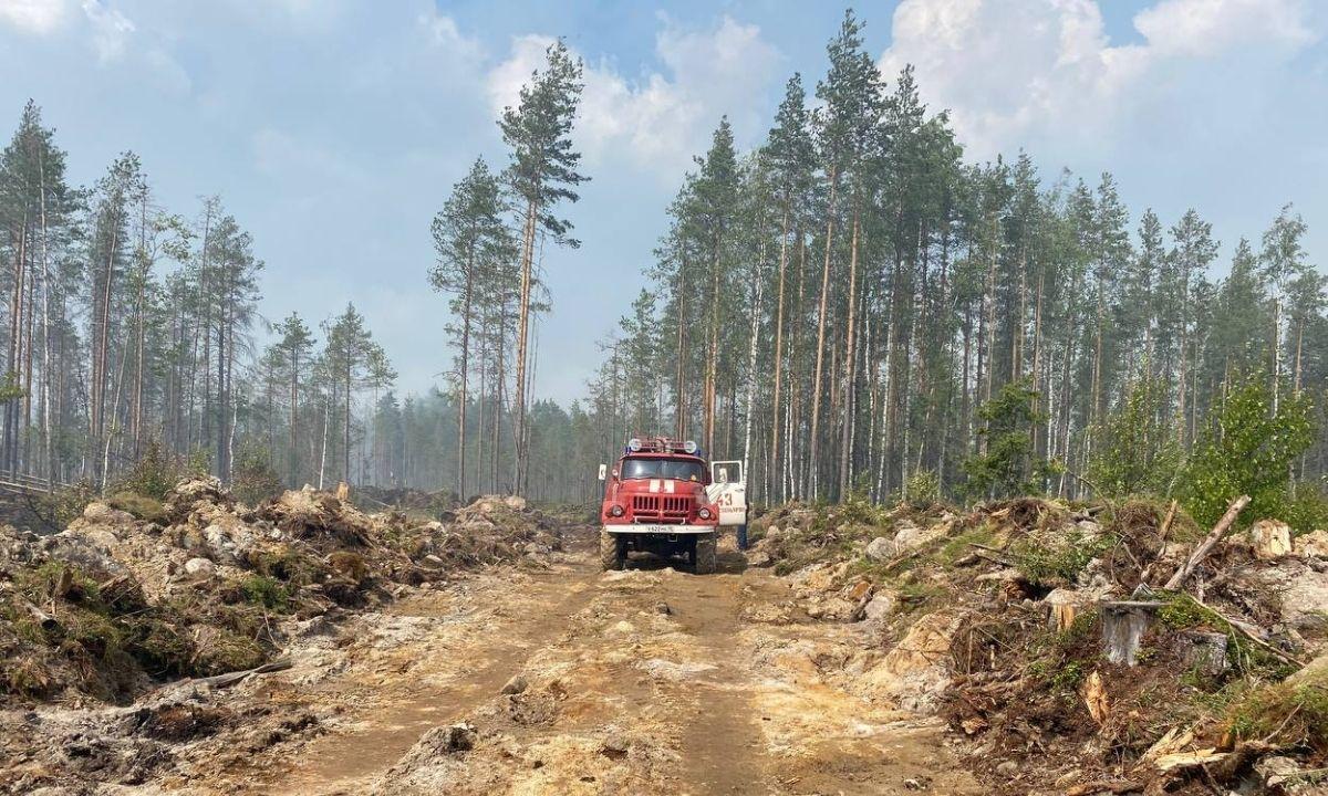 лес горит Карелия
