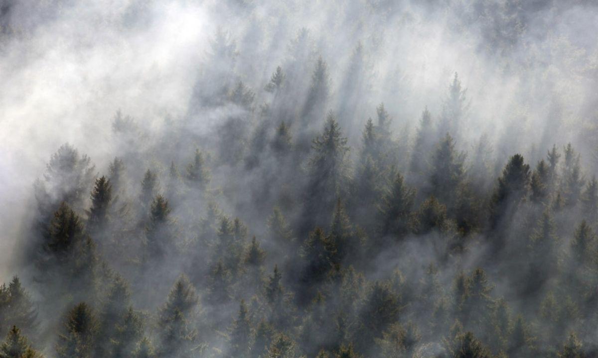 лес дым