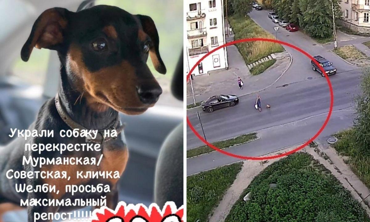 украли собаку на улице