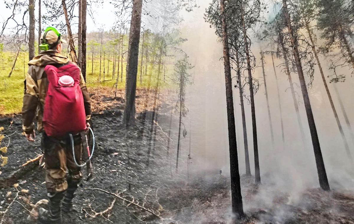 Волонтер в лесу на пожаре