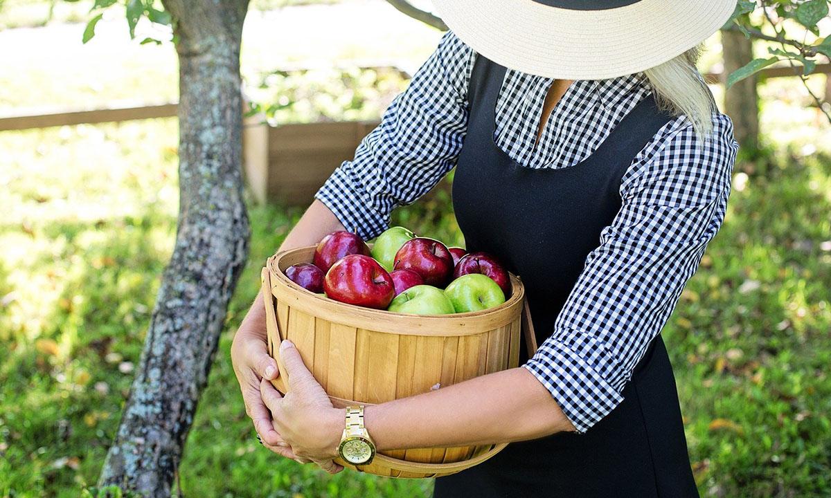 Диетолог рассказала, чем опасны яблоки