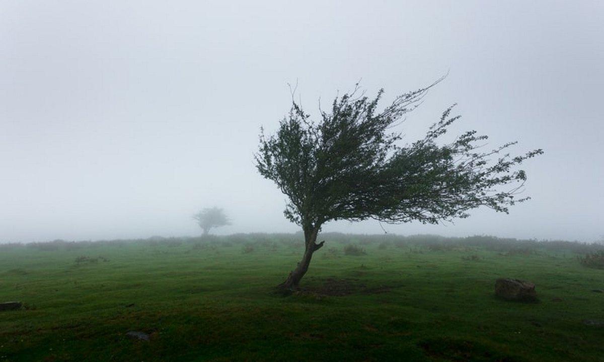 дерево, ураган, погода