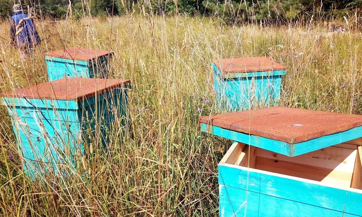 В Карелии обнаружили бутафорскую пасеку на землях сельхозназначения