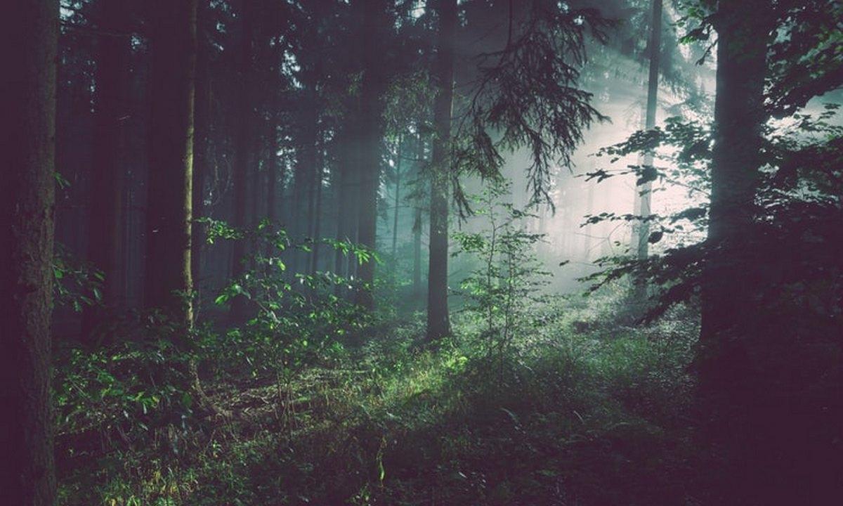 лес, свет, тьма
