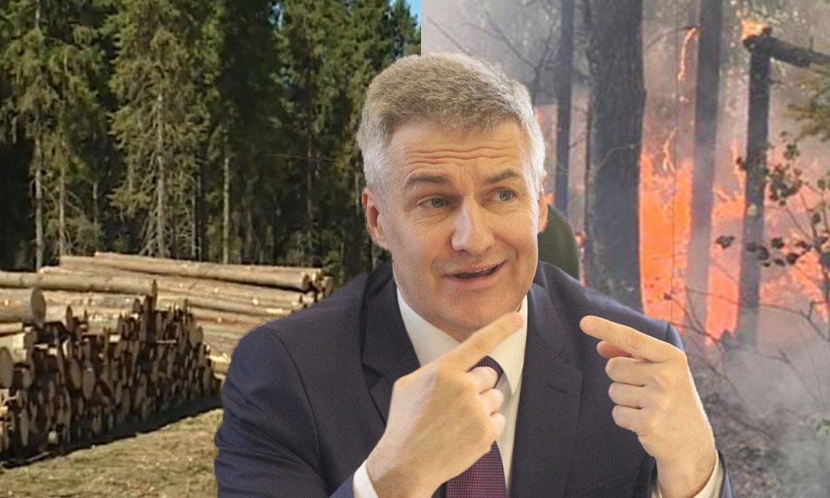 губернатор Карелии встал на защиту арендаторов лесов, которых заподозрили в поджогах