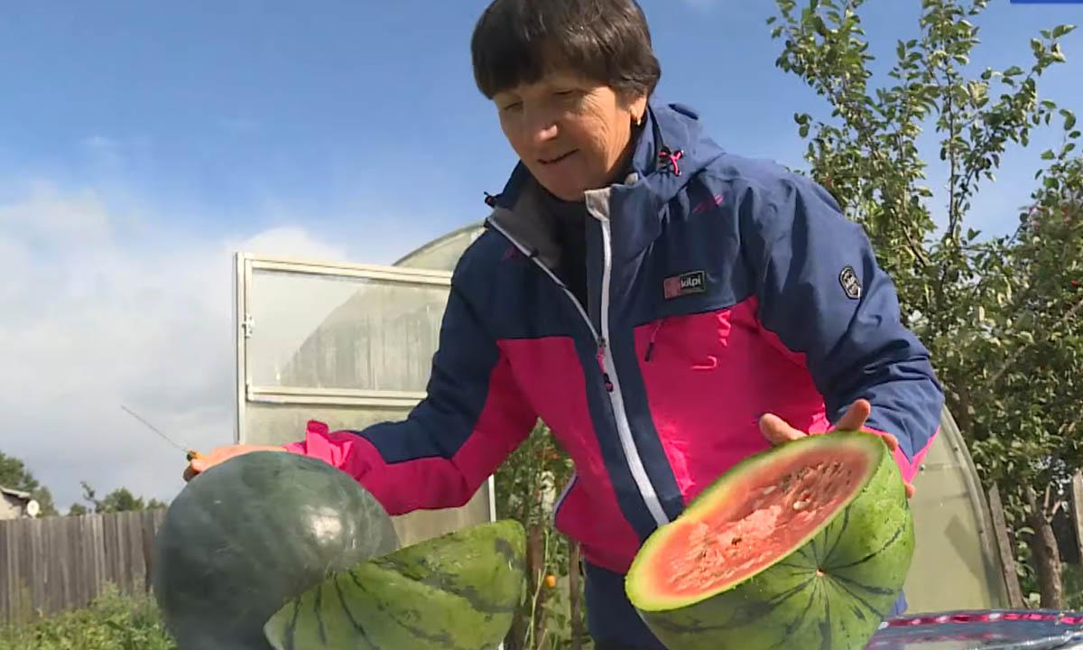 жительница карелии выращивает арбузы
